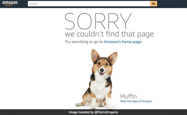 Amazon Error Sends Some Shoppers To Dog Photo, Not Product Page