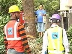 दिल्ली में पेड़ों को बचाने के लिए लोगों ने शुरू किया 'चिपको आंदोलन', इस आदेश का हो रहा है विरोध