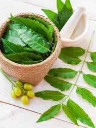 Neem For Hair: How To Use The Ayurvedic Wonder For All Your