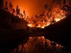 पुर्तगाल में तीन दिन से लगी है आग, अब तक 64 लोगों की मौत