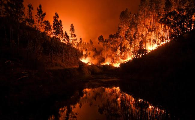 Huge Forest Fire Kills 62, Injures 50 In Portugal