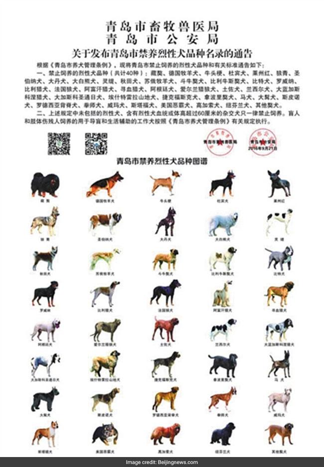 qingdao banned dogs