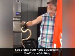 Watch: Man Reaches Into Vending Machine, Pulls Out A Snake