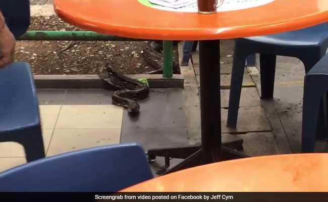 Video: कैफे में मजे से चख रहे थे नूडल्स तभी वहां आया एक अजगर, फिर...
