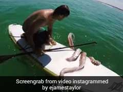 When Surfboard Surrounded by Giant Tentacles Is Caught On Camera