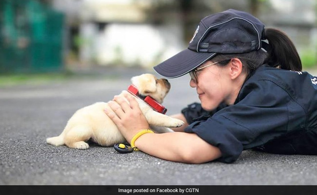 taiwan puppy police