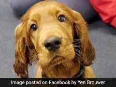 UK School Employs Puppy To Help Children Cope With Exam Stress
