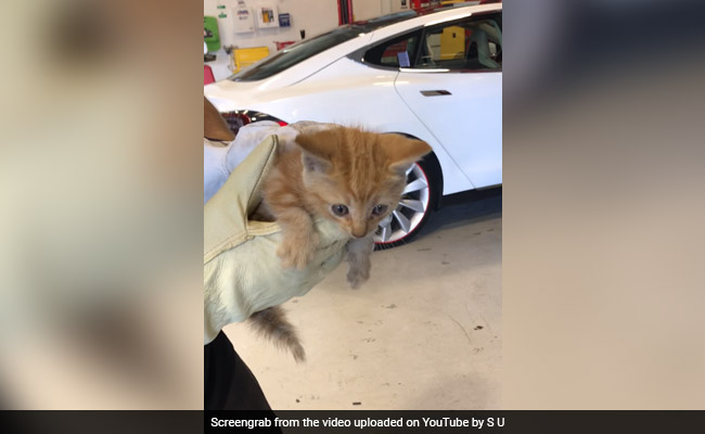 Tesla Mechanics Show Up To Rescue Tiny Kitten Stuck In Car Bumper