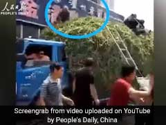 Video: To Escape Burning Building, People Jump Onto Vegetable Truck