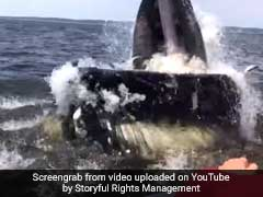 whale-breaches-next-to-boat_240x180_41498282942.jpg