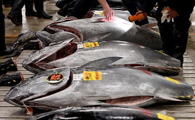 World's Biggest Fish Market In Tokyo Will Be Moved To New Location: Report