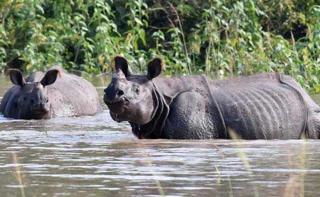 9 Rhinos Among 124 Animals Dead In Kaziranga Flood