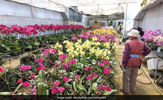 Woman Walks Away With Rare Orchid 'Worth Millions,' Causes Commotion