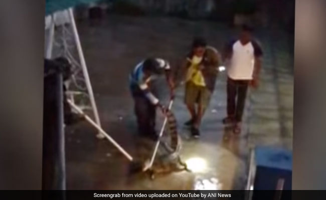 Video: 4.5-Foot Crocodile Enters House In Gujarat, Captured