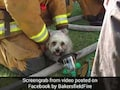 Watch: Firemen Rescue Pup From Burning House, Earn The Internet's Love