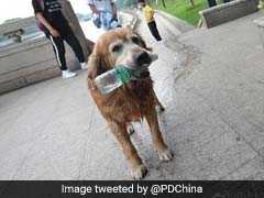 Bow-Wow! This Dog Has Been Clearing Trash From A River For 10 Years