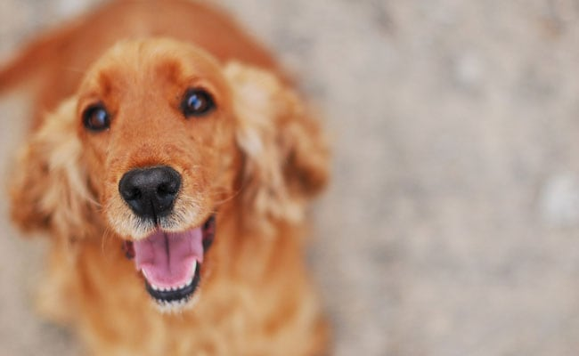 Having a Pet Dog May Reduce Heart Disease Risk! Try These 5 Foods Too