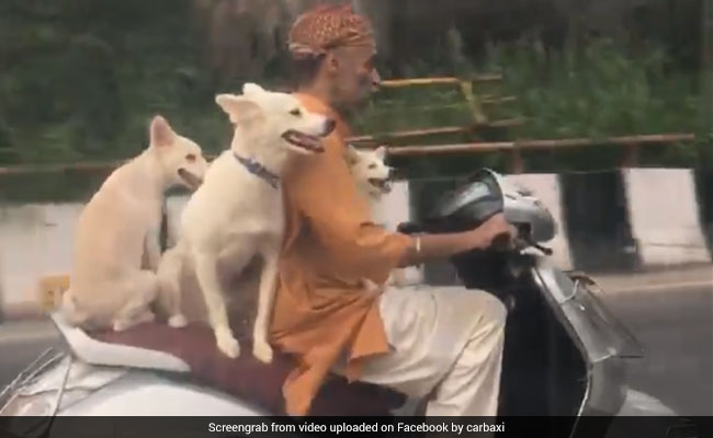 3 Delhi Dogs, Enjoying A Scooter Ride, Are Here To Brighten Up Your Day