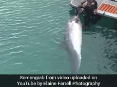 Incredible Video Shows Dolphin Stopping By Boat For A Belly Rub