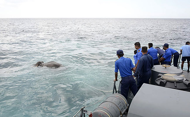 Sri Lanka Navy rescue elephant found in the middle of the ocean