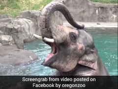 Samudra The Elephant Does Headstand In Water. Over A Million Views So Far