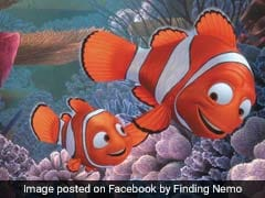'Finding Nemo' Got An Important Fact About Clownfish Wrong, Say Scientists
