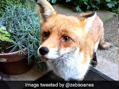 This Fox Just Signed A 3-Book Deal. What Did You Do Today?