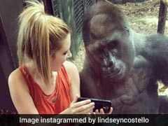 Viral: Woman And Gorilla Watch Videos Together. Internet 'Hearts' It