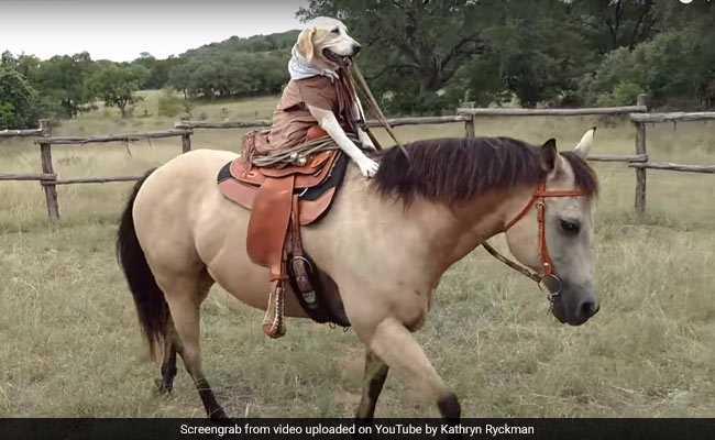 कुत्ता है यह शहंशाह! Video में देखिए तो जरा, कैसे शान से कर रहा है घोड़े की सवारी