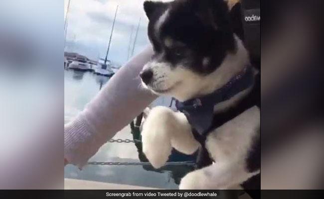 वायरल वीडियो: साइकिल चलाते हुए पपी कैमरे में कैद! ये वीडियो देखेंगे, तो दिल खुश हो जाएगा...