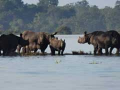 Over 140 Animals Found Dead In Flood-Hit Kaziranga National Park