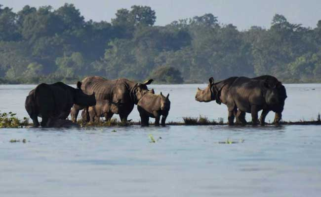 Over 140 Animals Found Dead In Flood-Hit Kaziranga National Park