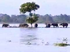 Assam Floods: Highlands Drowning But A Half-Kept Promise Is All Kaziranga Animals Have