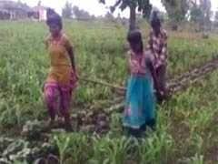 सीहोर : किसान की बदहाली की चौंकाने वाली तस्वीर, खेत में बैल की जगह जोत दी बेटियां