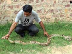 8-Foot Python Spotted Inside Air Force Plane In Agra. How It Was Rescued
