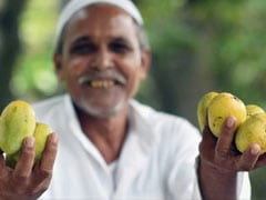 Why India, Pakistan Stake Claim To Rataul Mango's Luscious Legacy