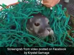 Watch: How Baby Seal Tangled In Stray Fishing Net Was Rescued