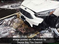 ईल मछलियों से लदे ट्रक के पलटने की ये तस्वीरें देखकर 'रोंगटे' खड़े हो जाएंगे...