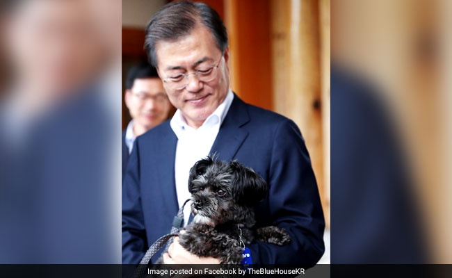 Rescued From Meat Farm, Tory Is Now South Korea's 'First Dog'