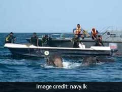 How A Navy Used Divers, Ropes To Rescue 2 Elephants Washed Out To Sea