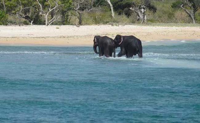sri lankan navy rescues elephants 650 afp