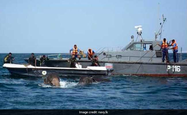 Sri Lanka Navy rescues another two elephants swept out to sea