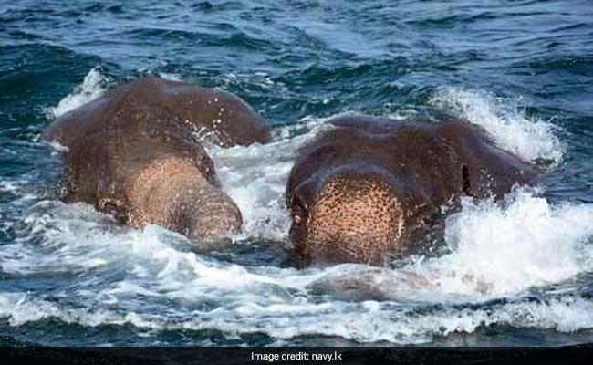 sri lankan navy rescues elephants 650 navy website