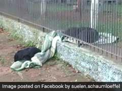 Puppy Shares Blanket With Stray Dog, Heartwarming Pic Is Viral