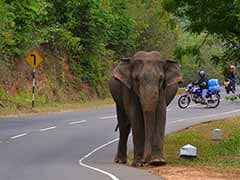 Ailing Elephant, Allowed To Be Euthanized, Dies Naturally