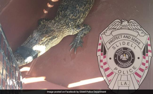 He Drove Past An Alligator And Took It Home. Then Called 911 For Help