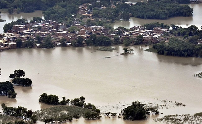 Bihar Flood Victims Loot Fodder To Save Cattle