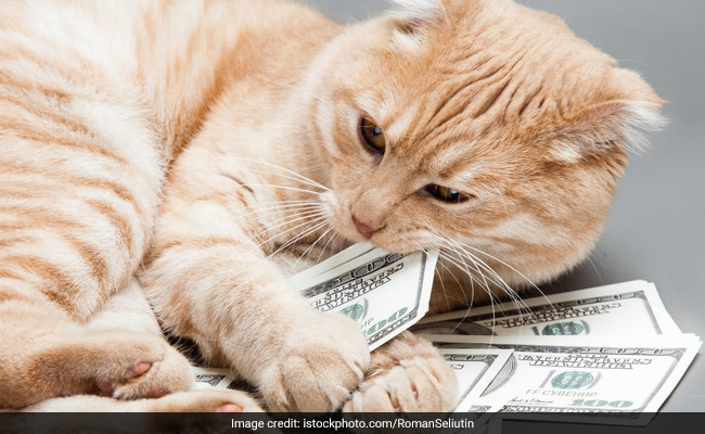 Woman Leaves $300,000 To Her Cats. They Were 'Like Her Babies'