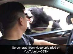 On Drive-Through Safari, Man Rolls Down Window To Feed Bears. Then, This