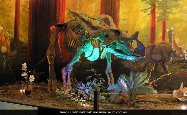 Dinosaurs beheaded at Australian museum